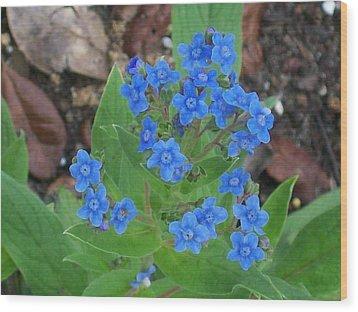 Blue Lambs Ear Wood Print by Belinda Lee