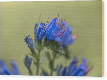 Wood Print featuring the photograph Blue by Leif Sohlman
