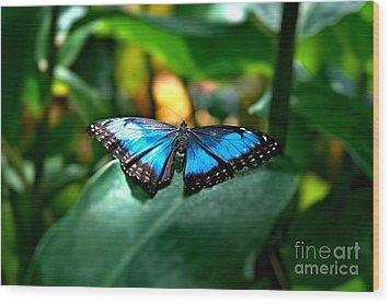 Blue Lit Butterfly Wood Print
