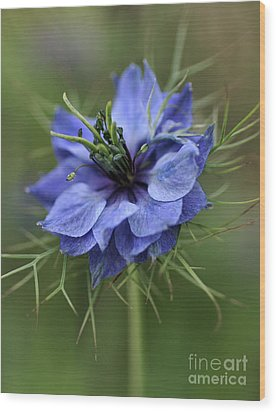 Wood Print featuring the photograph Blue Love by Joy Watson