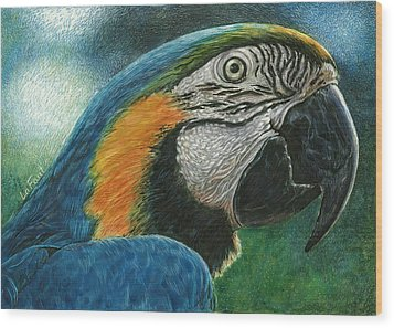 Wood Print featuring the drawing Blue Macaw by Sandra LaFaut