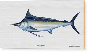 Blue Marlin Wood Print by Charles Harden