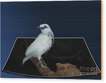 Blue Mask Bandit Bird Wood Print by Thomas Woolworth
