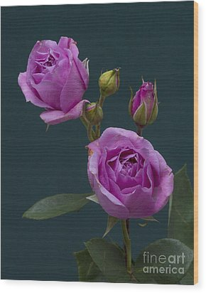 Blue Moon Roses Wood Print by ELDavis Photography
