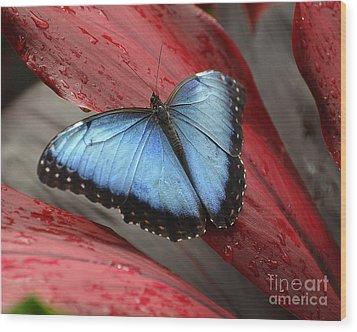 Blue Morpho 2 Wood Print