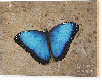 Blue Morpho #2 Wood Print by Judy Whitton