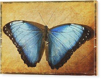 Blue Morpho Butterfly  Wood Print by Saija  Lehtonen