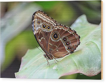 Wood Print featuring the photograph Blue Morpho Butterfly by Teresa Zieba