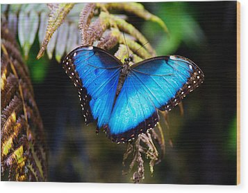 Blue Morpho Butterfly Wood Print