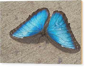 Wood Print featuring the photograph Blue Morpho by John Hoey