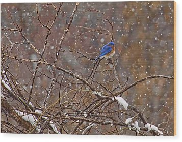 Wood Print featuring the photograph Blue Norther by Gary Holmes