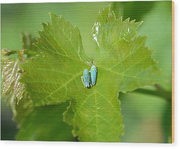 Blue On Green Wood Print by Fraida Gutovich