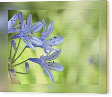 Blue On Green Wood Print