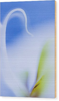 Wood Print featuring the photograph Blue Orchid Abstract by Bradley R Youngberg