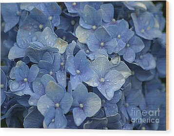 Blue Over You With Tears Wood Print by Living Color Photography Lorraine Lynch