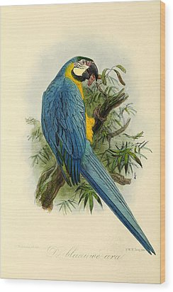 Blue Parrot Wood Print by Rob Dreyer