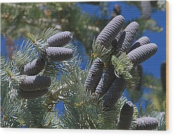 Blue Pine Cones Wood Print by Donna Kennedy