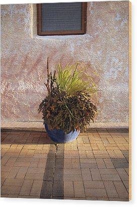Blue Planter Morning Sun Wood Print by Ann Powell