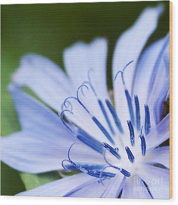 Blue Poetry.. Wood Print by Nina Stavlund