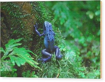 Blue Poison Dart Frog Wood Print by DejaVu Designs