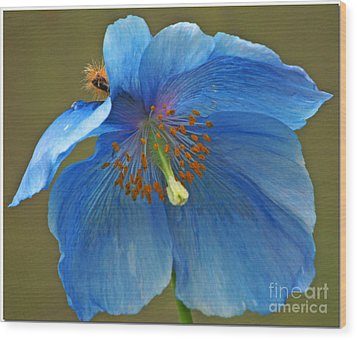 Wood Print featuring the photograph Blue Poppy by Chris Anderson