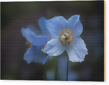 Wood Print featuring the photograph Blue Poppy by Jacqui Boonstra