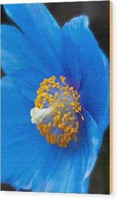 Blue Poppy Wood Print by Michael Porchik
