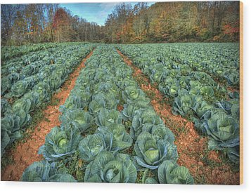 Blue Ridge Cabbage Patch Wood Print by Jaki Miller