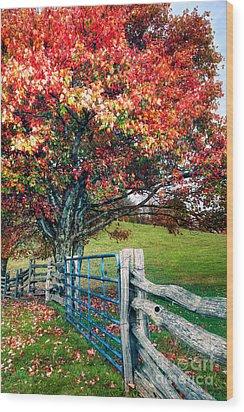 Blue Ridge - Fall Colors - Autumn Maple Tree Fence Gate I Wood Print by Dan Carmichael