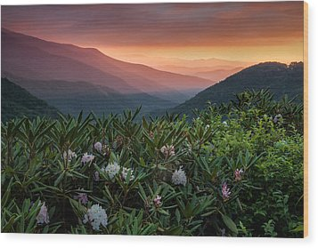 Blue Ridge Morn With Rose Bay Rhododendron  Wood Print by Rob Travis