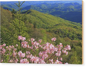 Wood Print featuring the photograph Blue Ridge Parkway Rhododendron Bloom- North Carolina by Mountains to the Sea Photo
