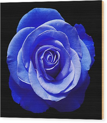 Blue Rose Wood Print by Aimee L Maher Photography and Art Visit ALMGallerydotcom