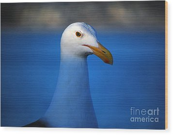 Blue Seagull Wood Print by Debra Thompson