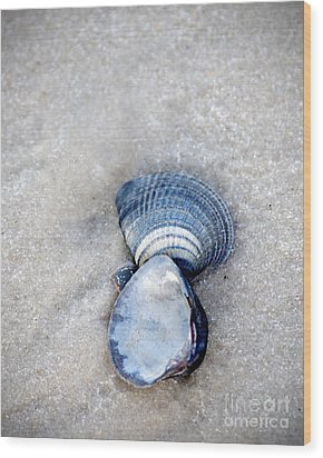 Blue Seashells Wood Print
