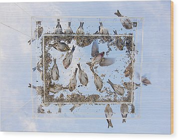 Blue Skies Above The Bird Feeder Wood Print by Tim Grams