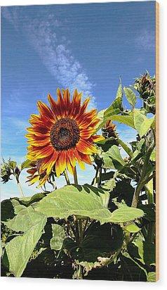 Blue Sky And Sun Flower Wood Print