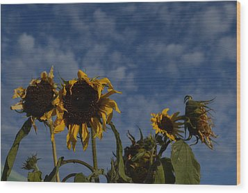 Wood Print featuring the photograph Blue Sky Buddies by Brian Boyle