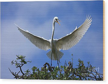 Wood Print featuring the photograph Blue Sky Landing by John F Tsumas