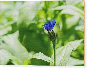 Blue Spot In The Green World - Featured 3 Wood Print by Alexander Senin