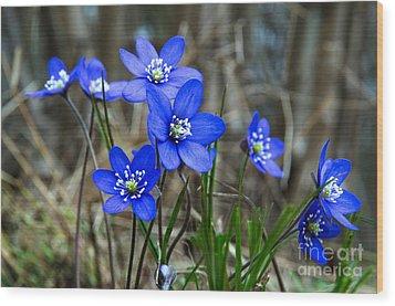 Blue Springtime Wood Print