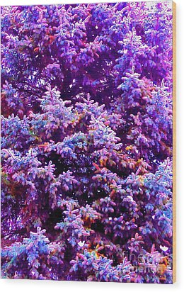 Blue Spruce In The Snow Wood Print by Ann Johndro-Collins
