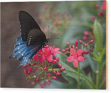 Blue Swallowtail Butterfly  Wood Print by Saija  Lehtonen