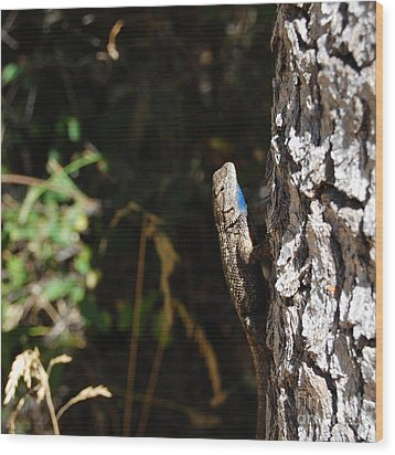 Wood Print featuring the photograph Blue Throated Lizard 1 by Debra Thompson
