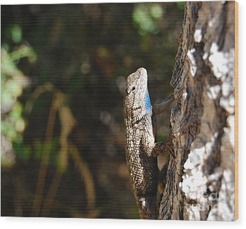 Wood Print featuring the photograph Blue Throated Lizard 2 by Debra Thompson