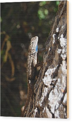 Wood Print featuring the photograph Blue Throated Lizard 3 by Debra Thompson