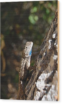 Wood Print featuring the photograph Blue Throated Lizard 4 by Debra Thompson