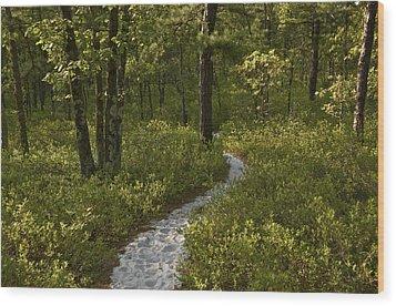 Blue Trail Batsto Wood Print