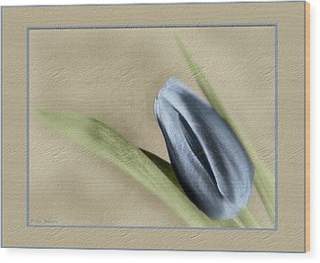 Blue Tulip Wood Print by Philip  Butler