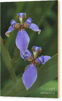 Blue Walking Iris Wood Print by Carol Groenen