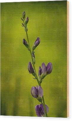 Blue Wild Indigo With Textures Wood Print by Wayne Meyer